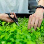 Kräutergarten anlegen – 5 Tipps