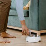 Hundefutter im Krankheitsfall: Tipps und Wissenswertes
